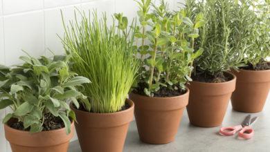 Kräutergarten in der Küche anlegen