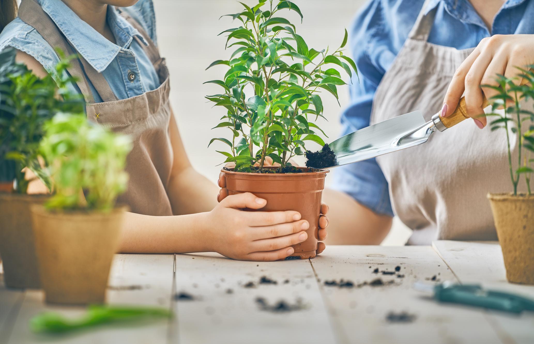 Image result for การ ปลูก ไม้ ดอกไม้ ประดับ